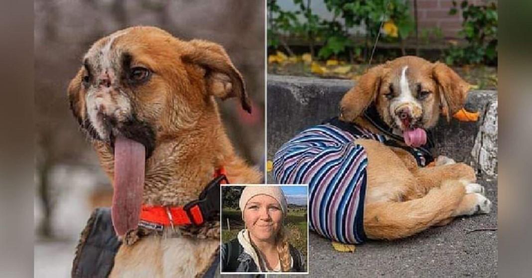 Cão que perdeu o focinho depois de ser maltratado foi adotado e é amado incondicionalmente
