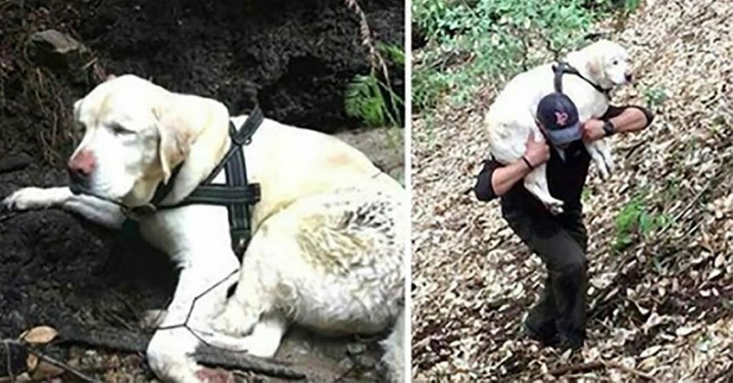 Cão cego resgatado