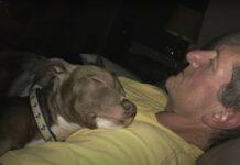 Cachorro resgatado perto morrer