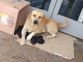 cão permanece em frente ao hospital