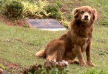 Cão reside no cemitério