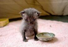 Mulher resgata gatinho abandonado