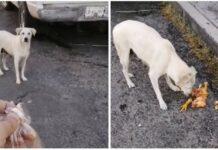 Cão faminto que implorava por comida