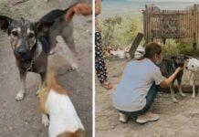 Cão perdido na rua salva vida de bebé