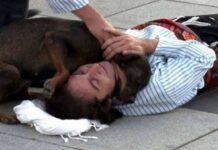 Cão entra em cena e tenta salvar actor