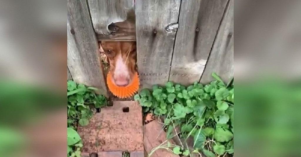 Cão faz buraco em cerca