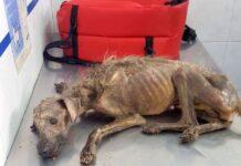 Mulher luta para salvar cão abandonando