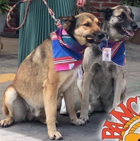 Dois cães são adotados