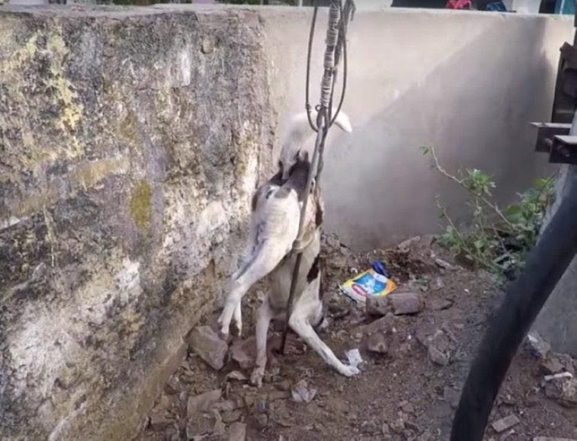 Equipa resgate luta para salvar cão