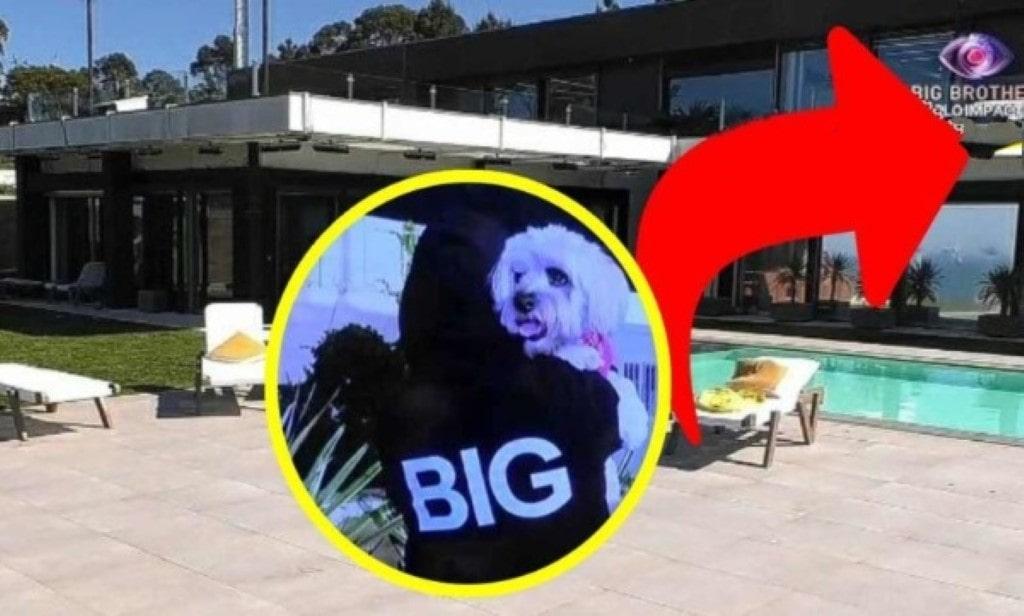 identidade da voz do Big Brother