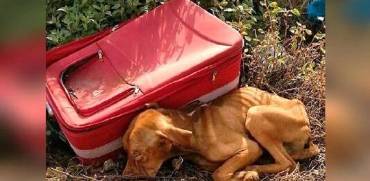 Cão abandonado meio nada