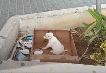Cão abandonado numa caixa