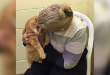 Mulher adota gato idoso