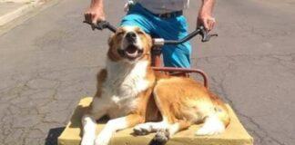 cão ama passear bicicleta com dono.