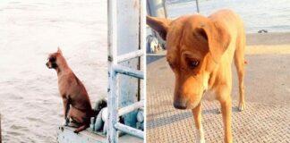 Um cão abandonado em cais esperou meses pelo retorno do dono. A foto do animal a olhar através de um rio