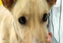 Cão abandonado e com a boca fechada