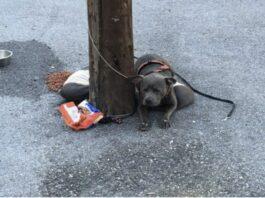 Cão abandonado amarrado num poste