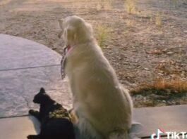 Cão senta-se no mesmo local todos os dias