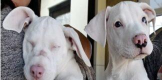 Cão de abrigo cuida da irmã surda