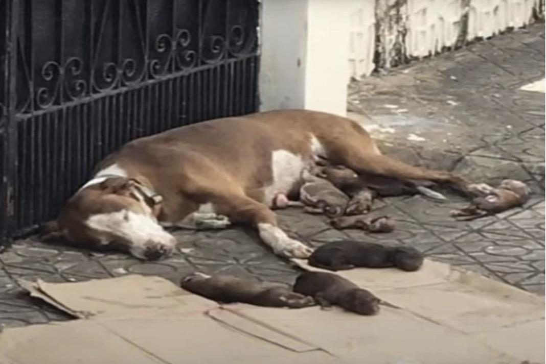 cadela dá à luz e luta para proteger os filhos